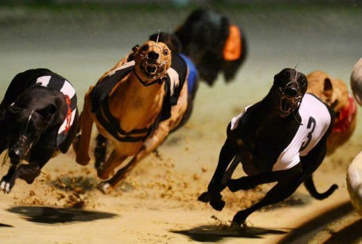 How to bet on Greyhounds