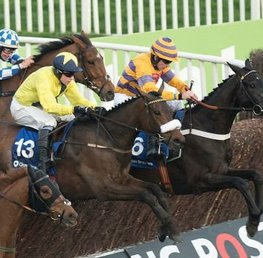 How Safe Is Cheltenham Racecourse For Horses?